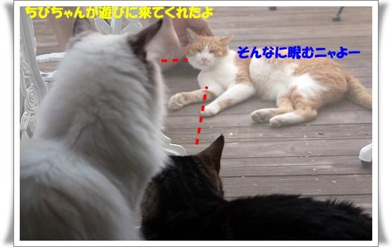 s-0812IMG_9110.jpg