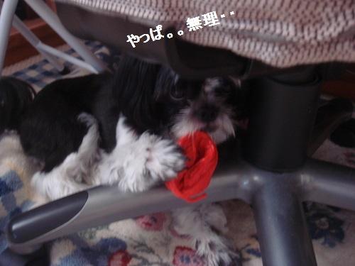 DSC04465moji.jpg