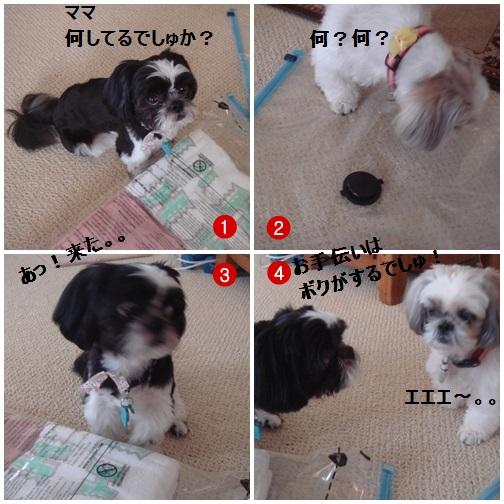 pageDSC04438x4moji.jpg
