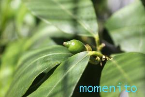 m-lemon614.jpg