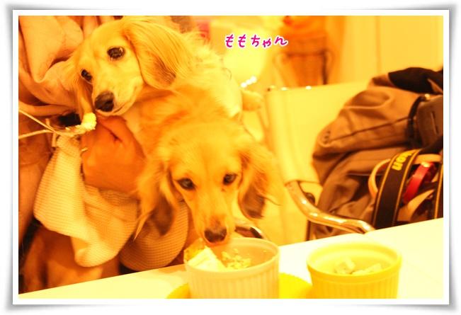 2014_11_29_2273-1.jpg