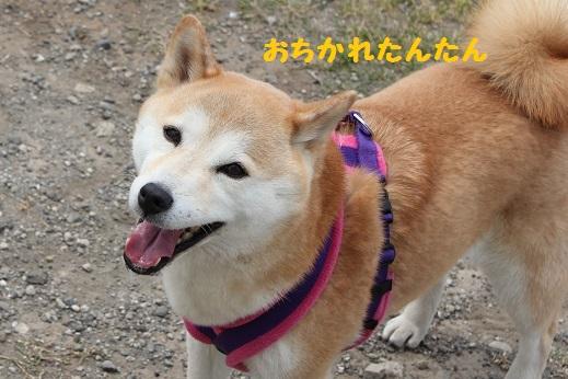 おちかれ0516