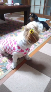 ララ母の犬バカ日記-110704_1957~010001.jpg