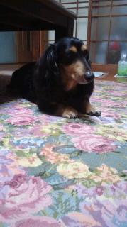 ララ母の犬バカ日記-110704_1956~010001.jpg