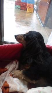 ララ母の犬バカ日記-110706_1547~030001.jpg