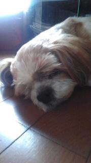 ララ母の犬バカ日記-110707_0948~010001.jpg