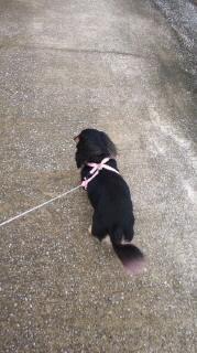 ララ母の犬バカ日記-110707_1004~010001.jpg