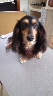 ララ母の犬バカ日記-110708_1449~010001.jpg