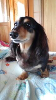 ララ母の犬バカ日記-110714_0654~010001.jpg