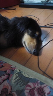 ララ母の犬バカ日記-110717_1958~010001.jpg