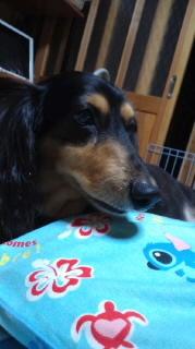 ララ母の犬バカ日記-110718_2244~010001.jpg