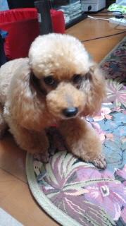 ララ母の犬バカ日記-110719_2038~010001.jpg