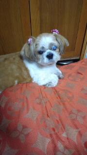 ララ母の犬バカ日記-110719_2038~020001.jpg