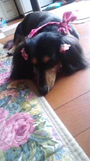 ララ母の犬バカ日記-110726_1018~010001.jpg