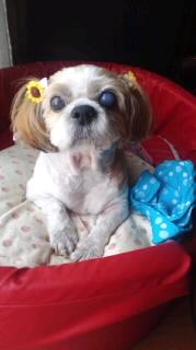 ララ母の犬バカ日記-110726_1018~020001.jpg