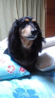 ララ母の犬バカ日記-110728_2117~010001.jpg