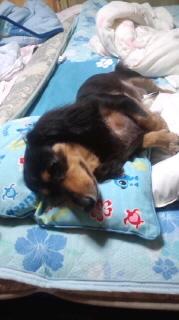 ララ母の犬バカ日記-110728_2125~010001.jpg