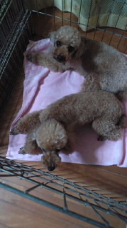 ララ母の犬バカ日記-110729_2154~010001.jpg