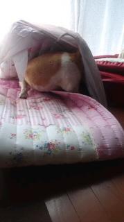 ララ母の犬バカ日記-110805_1420~010001.jpg