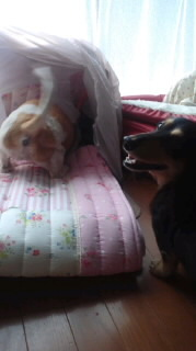 ララ母の犬バカ日記-110805_1420~020001.jpg