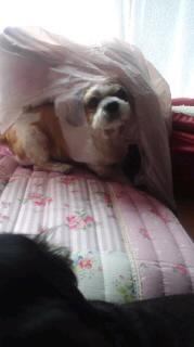 ララ母の犬バカ日記-110805_1420~030001.jpg