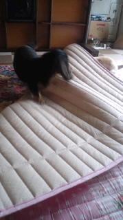 ララ母の犬バカ日記-110805_1442~020001.jpg