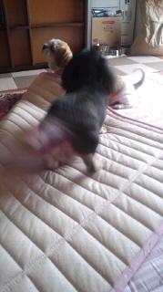 ララ母の犬バカ日記-110805_1442~030001.jpg