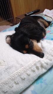 ララ母の犬バカ日記-110809_2115~020001.jpg