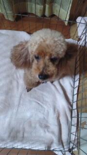 ララ母の犬バカ日記-110809_2115~010001.jpg