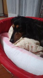 ララ母の犬バカ日記-110810_2158~010001.jpg