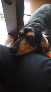 ララ母の犬バカ日記-110812_1741~010001.jpg