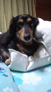 ララ母の犬バカ日記-110813_2127~020001.jpg
