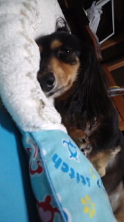 ララ母の犬バカ日記-110813_2204~010001.jpg