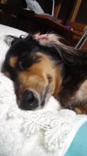 ララ母の犬バカ日記-110813_2205~010001.jpg