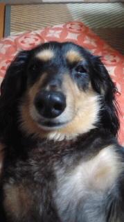 ララ母の犬バカ日記-110817_2012~010001.jpg