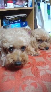 ララ母の犬バカ日記-110820_2046~010001.jpg