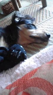 ララ母の犬バカ日記-110821_1404~020001.jpg