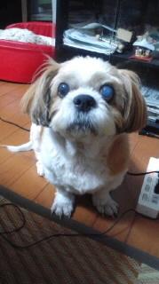 ララ母の犬バカ日記-110821_2012~020001.jpg