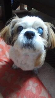 ララ母の犬バカ日記-110821_2012~030001.jpg
