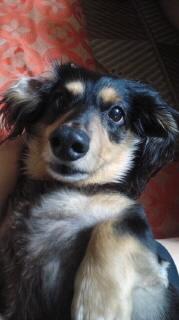 ララ母の犬バカ日記-110823_2004~010001.jpg