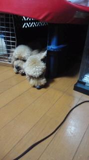 ララ母の犬バカ日記-110823_2005~010001.jpg