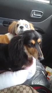 ララ母の犬バカ日記-110826_1412~010001.jpg