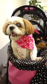 ララ母の犬バカ日記-110826_1549~030001.jpg