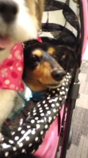 ララ母の犬バカ日記-110826_1549~040001.jpg