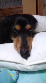 ララ母の犬バカ日記-110829_2119~010001.jpg