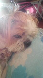 ララ母の犬バカ日記-110830_0632~020001.jpg