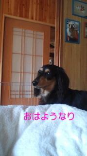 ララ母の犬バカ日記-110831_0714~0100010001.jpg