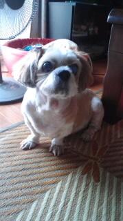 ララ母の犬バカ日記-110831_1807~010001.jpg