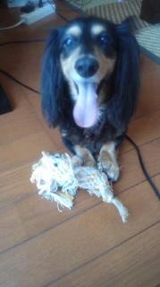 ララ母の犬バカ日記-110901_1016~020001.jpg