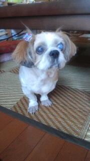 ララ母の犬バカ日記-110901_1017~010001.jpg